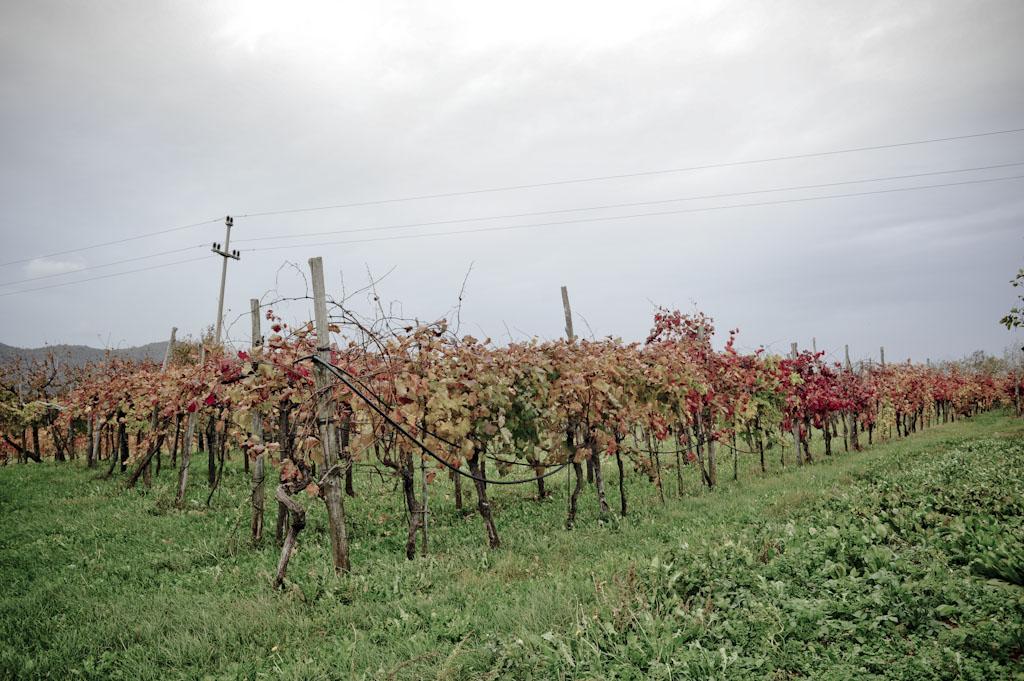 Il Carso di Emil Tavcar, vini naturali di Malvasia, Vitovska e Terrano