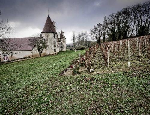 Chateau de Chareil: storia di vigna, piacere e nobiltà