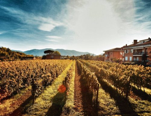 La Lunigiana, i vini di Stefano Legnani e le eccellenze del territorio