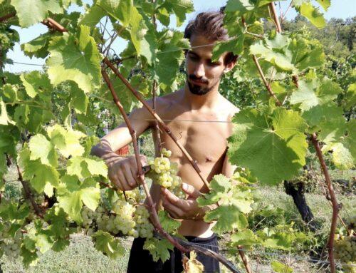 Intervista a Mattia Caruzzi: Sot La Mont e i vitigni autoctoni del Friuli
